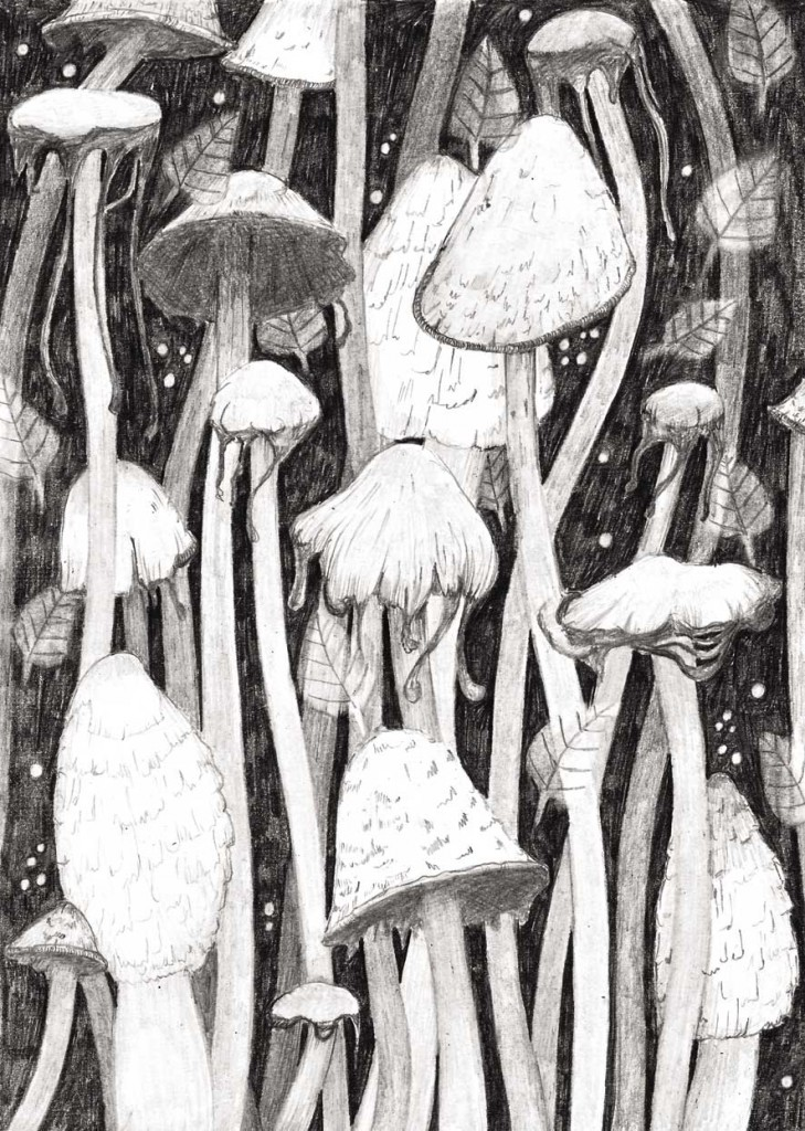 fungus-poster-lowres